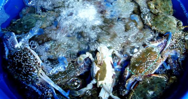 อาหารทะเลพัทยา