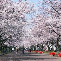 ทัวร์ญี่ปุ่น เมษายน 2562 (2019) มีส่วนลดแน่นอน